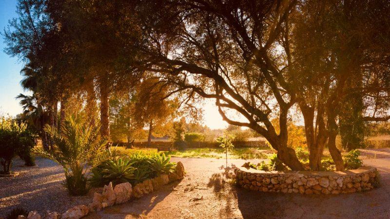 atardecer+dorado+atras+villa+sunset+Sonneuntergang+Olivenbaum